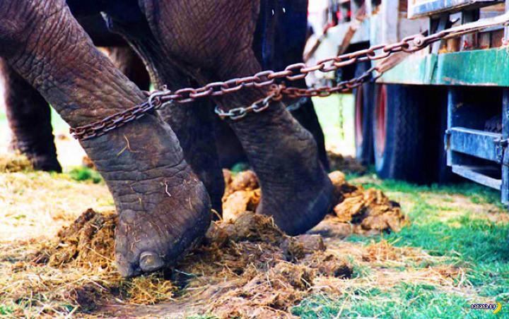 Цирковые животные и Голландия