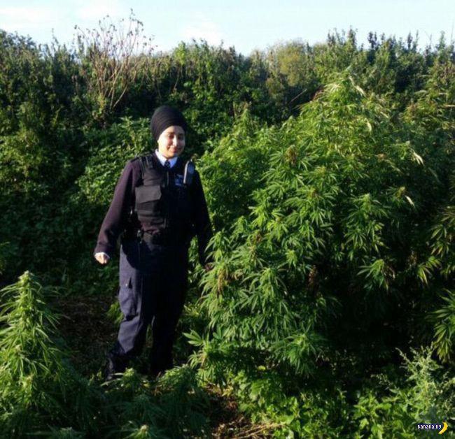 Полиция нашла поле конопли