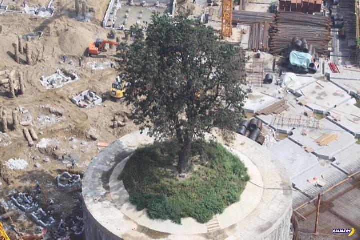 $627,000 ради спасения дерева
