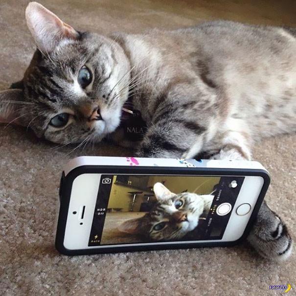 Кот Нала, самый популярный кот в Интернете