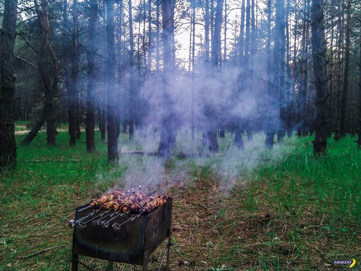 В России предлагают ввести налог на шашлык в лесу