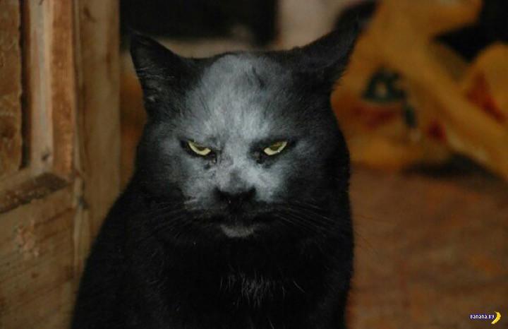 Тайна демонического кота