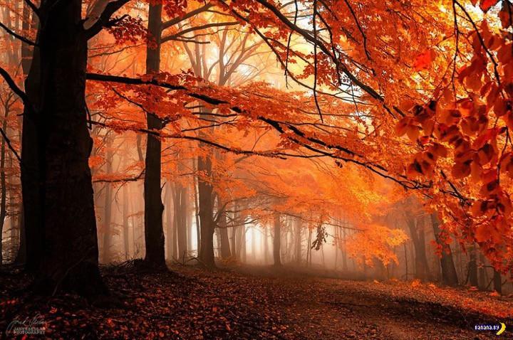 http://banana.by/uploads/posts/2015-10/1444136477_dreamlike-autumn-forests-janek-sedlar-7__880.jpg