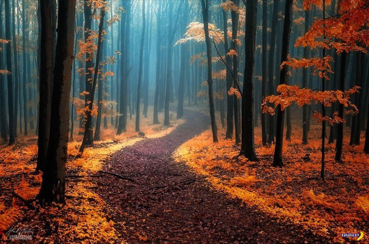 http://banana.by/uploads/posts/2015-10/1444136482_dreamlike-autumn-forests-janek-sedlar-12__880.jpg
