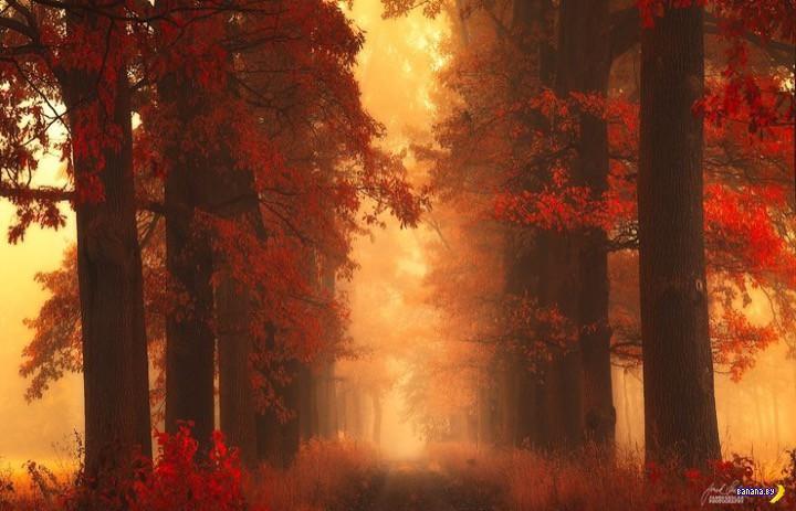http://banana.by/uploads/posts/2015-10/1444136507_dreamlike-autumn-forests-janek-sedlar-22__880.jpg
