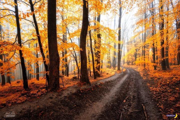 От осени тоже есть польза