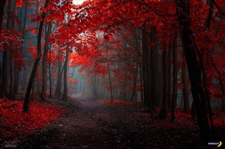 http://banana.by/uploads/posts/2015-10/1444136517_dreamlike-autumn-forests-janek-sedlar-5__880.jpg
