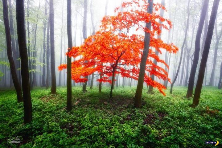 http://banana.by/uploads/posts/2015-10/1444136527_dreamlike-autumn-forests-janek-sedlar-14__880.jpg