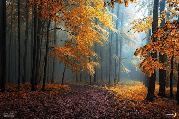 http://banana.by/uploads/posts/2015-10/1444136555_dreamlike-autumn-forests-janek-sedlar-11__880.jpg