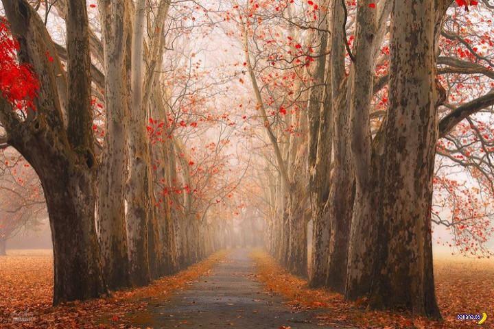 http://banana.by/uploads/posts/2015-10/1444136559_dreamlike-autumn-forests-janek-sedlar-39__880.jpg