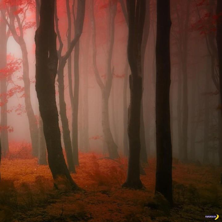 http://banana.by/uploads/posts/2015-10/1444136561_dreamlike-autumn-forests-janek-sedlar-2__880.jpg