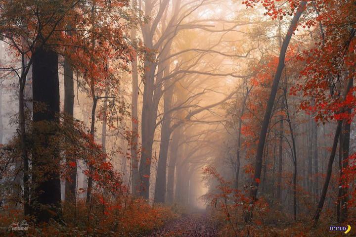 http://banana.by/uploads/posts/2015-10/1444136592_dreamlike-autumn-forests-janek-sedlar-38__880.jpg