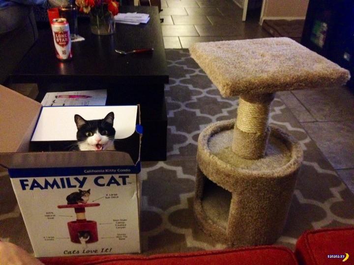 Почему коты так любят коробки?