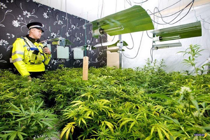 Экономический эффект от легализации марихуаны в Великобритании