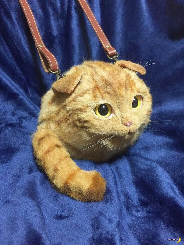 Сложно поверить, но это не кот