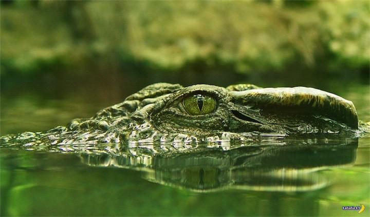 Про сон крокодилов
