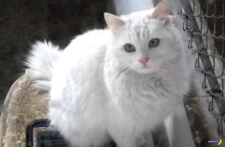 Пьяный кот Aljosha