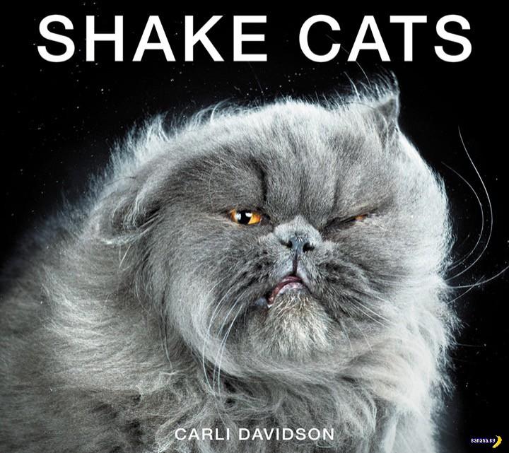 Отряхивающиеся коты