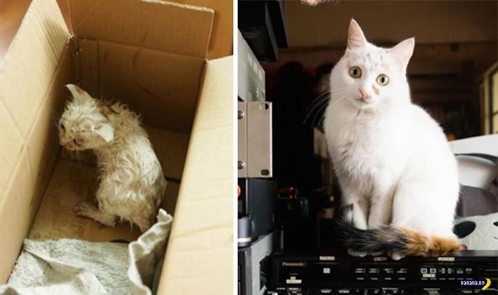 Спасённые котейки