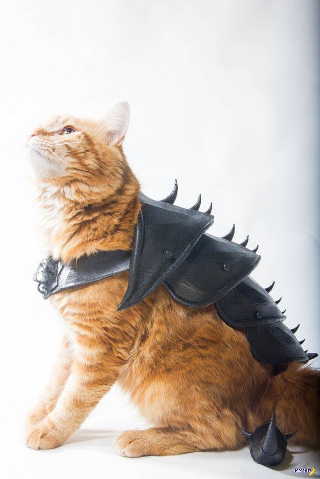 Доспехи для кота