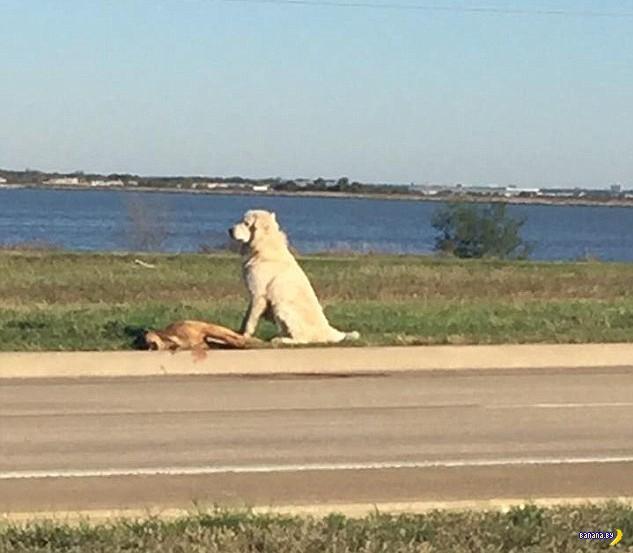 Когда собаки добрее людей