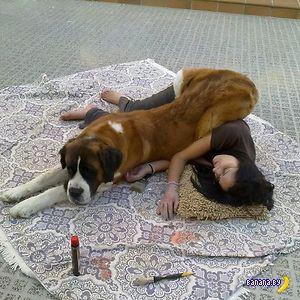 Собаки и неуважение к личному пространству