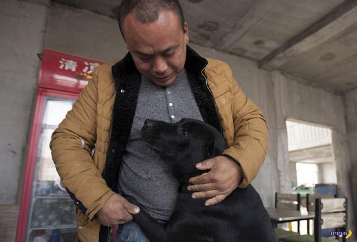Миллионер спас тысячи собак в Китае