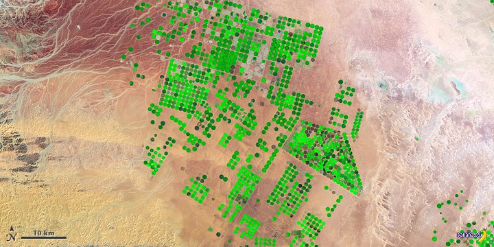 Земледелие в пустыне