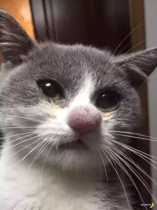 Знакомства котов с пчёлами