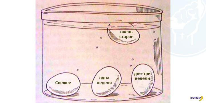 Лайфхак: экспресс-определение свежести яиц