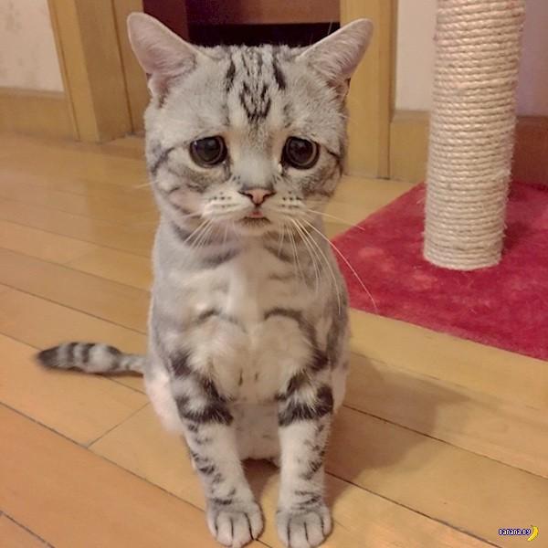 Найден очередной самый грустный кот в мире