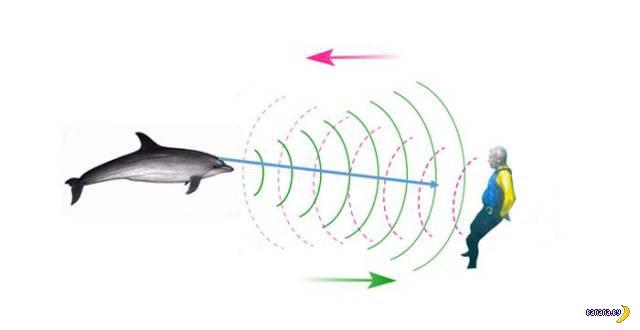 Ученые показали, как дельфины видят людей
