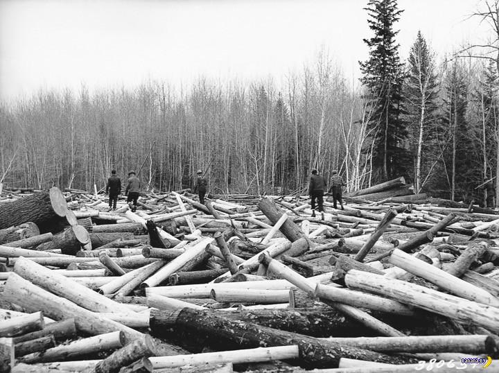Когда деревья были большими