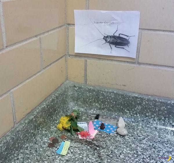 Проводы таракана в лучший мир