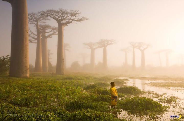 Лучшие фотографии 2015 года по версии журнала National Geographic