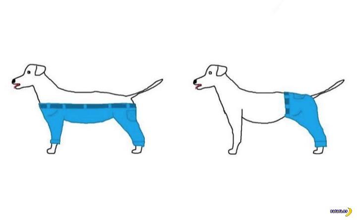 Вопрос про штаны для собаки