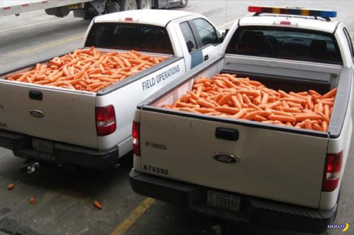 2817 поддельных морковок