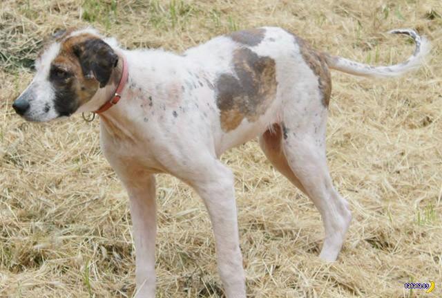 Спасение пса в Болгарии