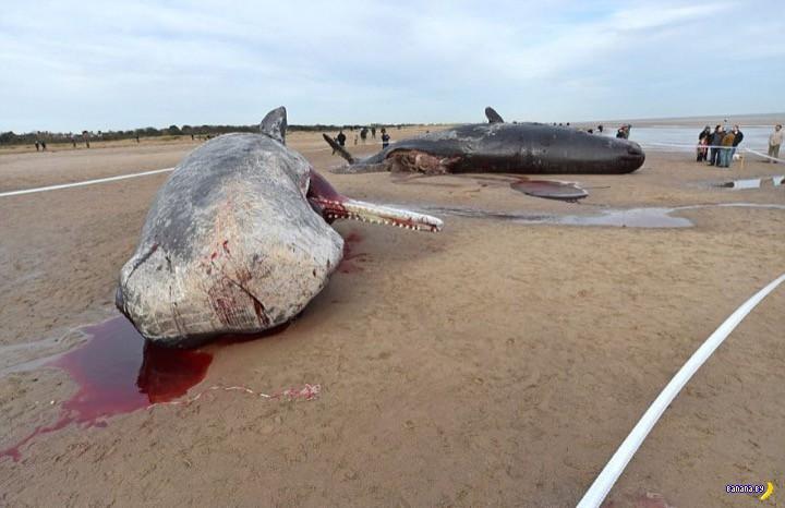 """Аттракцион """"Мертвые киты"""""""