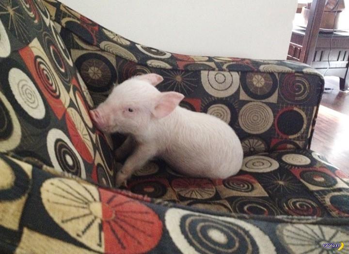 История свинки по имени Эстер