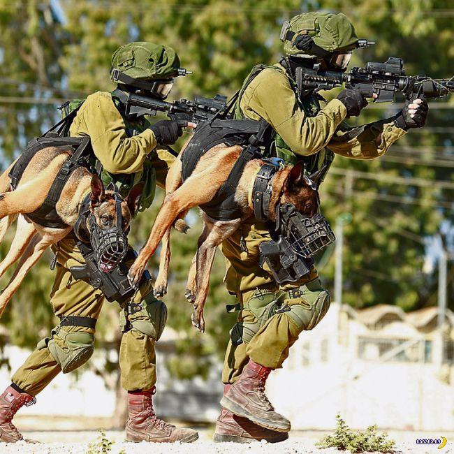 Израильский военный пёс крут, но не на все 100%