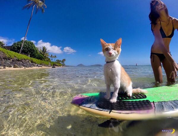 Одноглазый кот-сёрфингист