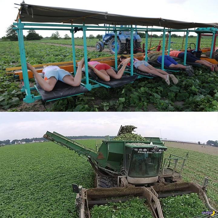 Лукашенко: нужно на 25% снизить себестоимость продукции!