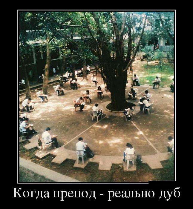 Демотиваторы - 630