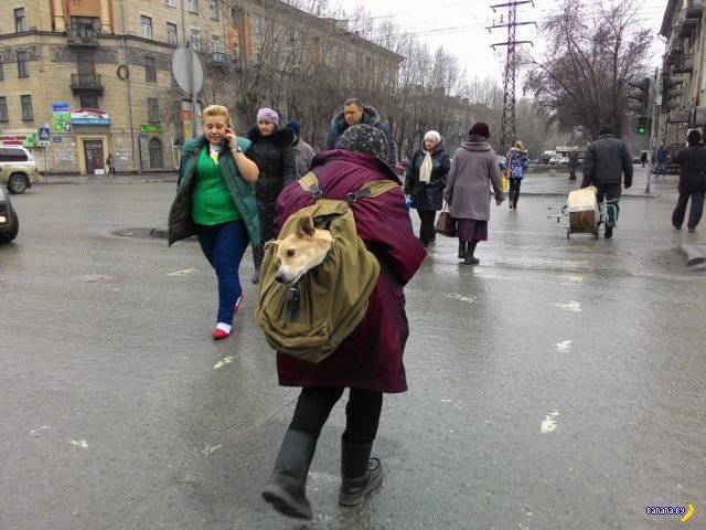 А тем временем в России - 49