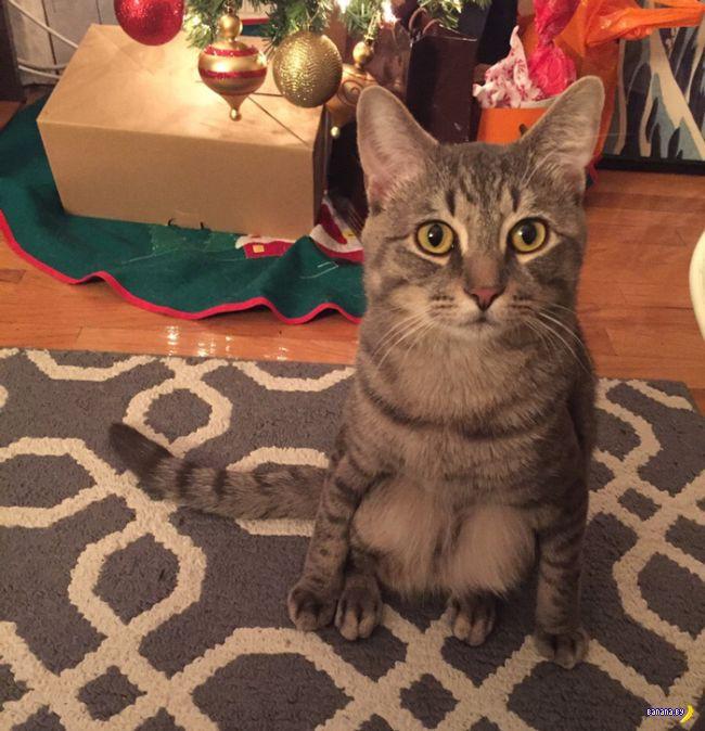 Просто кот –гопник