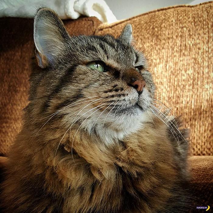 Самый старый господин Кот на планете