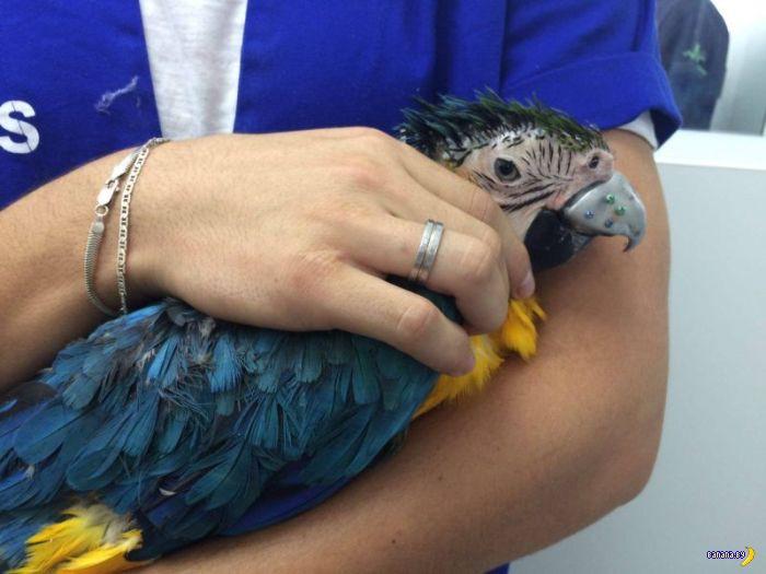Как спасали попугаю клюв