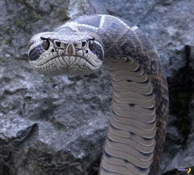 Нет, это не змея!