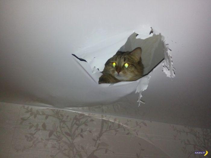 Кошачья засада